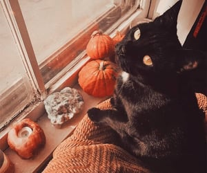 autumn, cat, and animals image