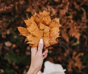 autumn, fall, and season image