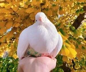 bird and leaf image