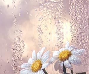 background, beautiful, and beauty image