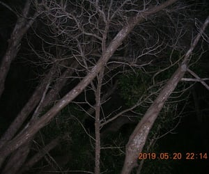 dark, horror, and trees image