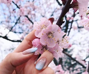 cherry blossom, flowers, and nails image