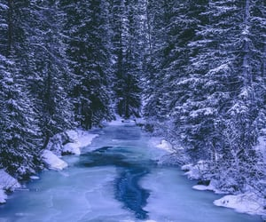 blue, cold, and conifers image