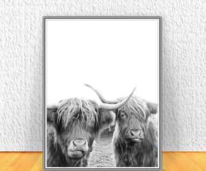 animal print, modern farmhouse, and highland cow print image