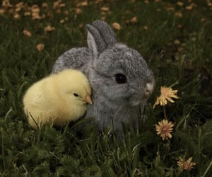 bunny, animal, and Chick image