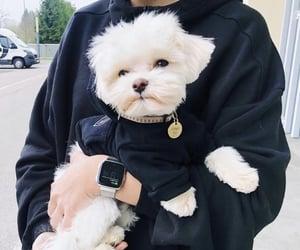 animal, dog, and goals image