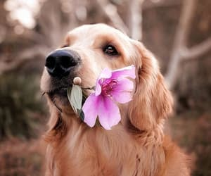 animals, dog, and flowers image