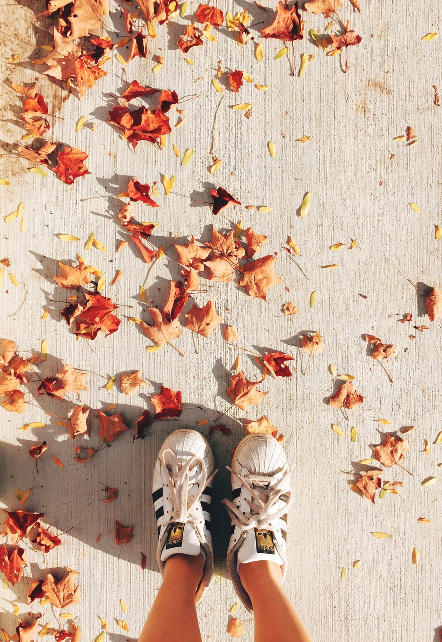 leaves, adidas, and autumn image