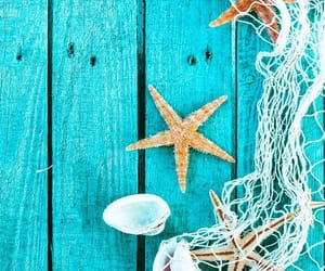 aesthetic, sea shells, and blue aesthetic image