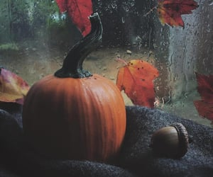 autumn, autumnal, and cozy image