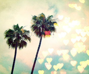 california, photography, and ♥ image