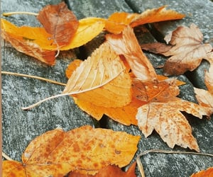 autumn, photo, and photography image