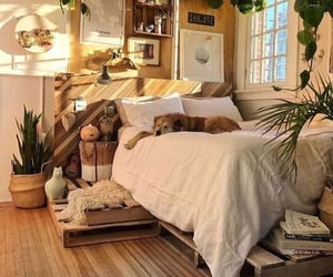 decor, plants, and room image