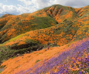 california, flowers, and landscape image