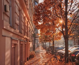 autumn, travel, and street image