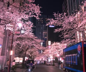 japan, night, and pink image