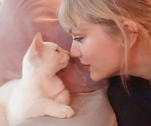 cat, Taylor Swift, and lq image