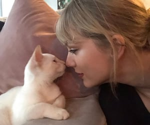cats and Taylor Swift image