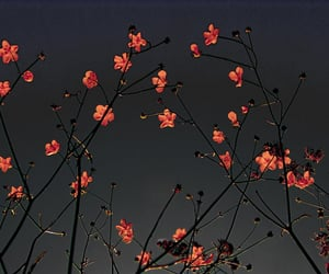 flowers, nature, and night image