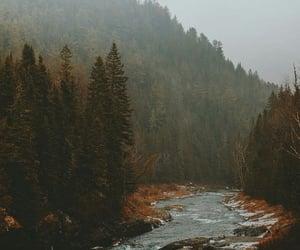 article, nature, and rain image