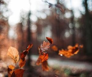 autumn, fall, and falling image