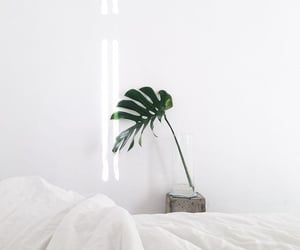 white, plants, and interior image