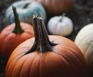 article, Halloween, and Witches image