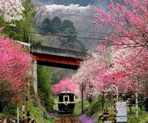 japan, train, and nature image
