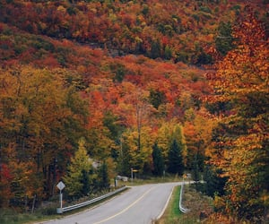 autumn, colors, and fall image