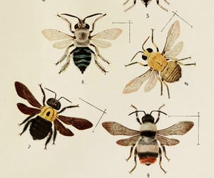 aesthetic, bees, and Paper image