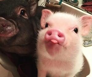 animals, pig, and cerditos image