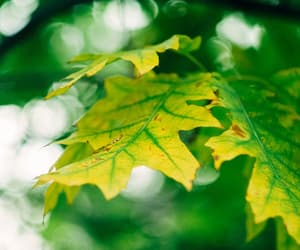 autumn, beauty, and leaves image