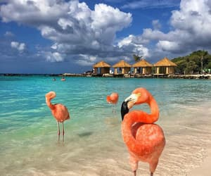 flamingo, beach, and travel image
