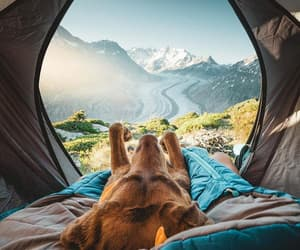 dog, nature, and vacation image