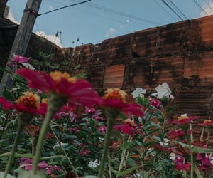 flowers, garden, and moon image