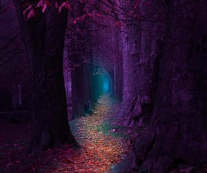 forest, nature, and purple image