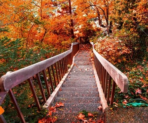 autumn, autumn colors, and fall image
