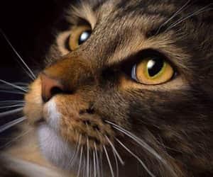 Animales, animals, and belleza image