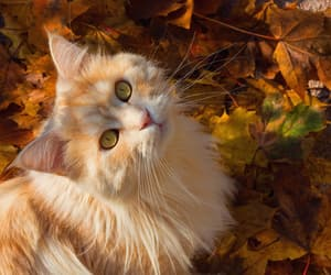autumn, autumnal, and beautiful image