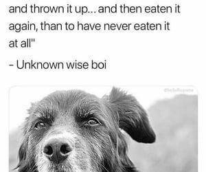 dog and meme image