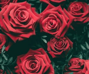 flowers, roses, and random image