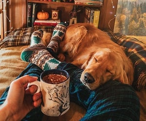 dog, autumn, and coffee image