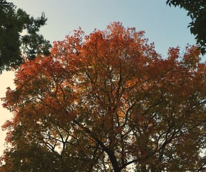 autumn, earth, and fall image