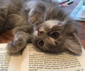 cat, book, and pet image