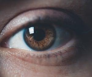 brown, eyes, and look image