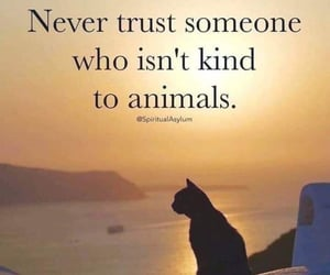 reality, rights, and loveanimals image