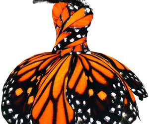 butterfly, dress, and orange image