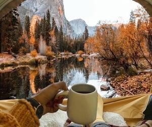fall, nature, and autumn image