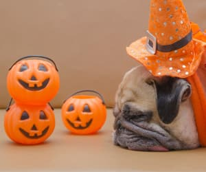 autumn, pumpkins, and season image