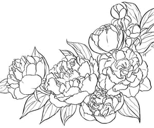lineart image